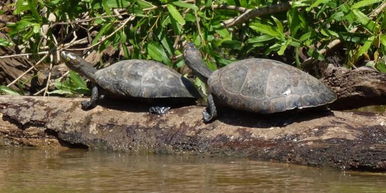"""PN MADIDI / Dans la pampa : deux tortugas, à prononcer """"tortougasse"""""""