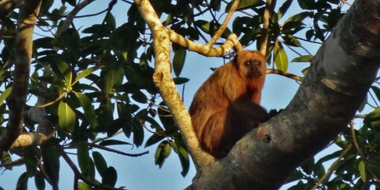 PN MADIDI / Dans la pampa : un manéché attend la nuit pour partir à la chasse