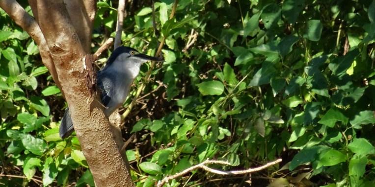 PN MADIDI / Dans la pampa : un martin pescador attend àl'ombre