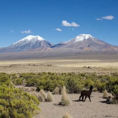 PN SAJAMA / Les deux volcans jumeaux : Pomerane (6282m) et Parinacota (6342m)