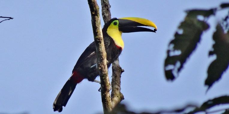 MINDO / Balade dans la jungle des hauteurs de la Yellow House - une belle rencontre