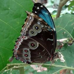 MINDO / Ferme de papillons - fermé