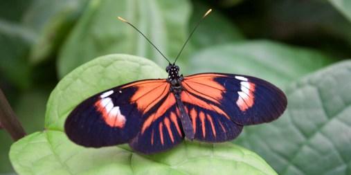 MINDO / Ferme de papillons