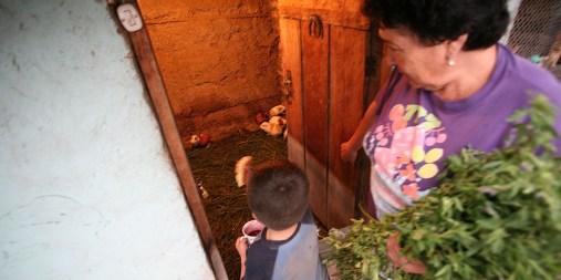 QUITO / Elevage maison de cuys