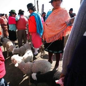 SAQUISILI / Carré des moutons