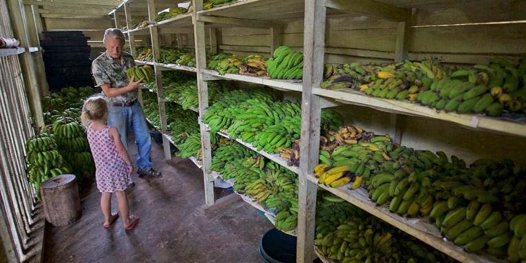 FINCA SANTA ELENA / Séchoir à banane