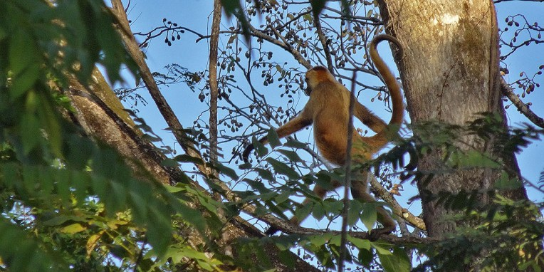 FINCA CANAS CASTILLO / Passage d'un groupe de singes araignées