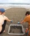 MONTEZUMA / Relâché de 99 tortues