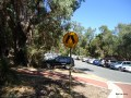 073-Ghost walker Western Aus