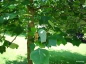 Tuilp Tree
