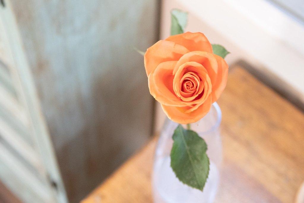 Single Stem Apricot Rose in a Glass Vase