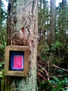 Cougar Mountain, Feb 23, 2013