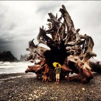 First Beach, November 18, 2012, Biggest Driftwood