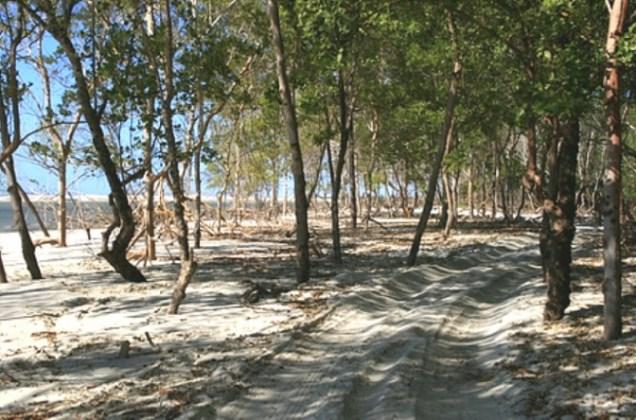 0392-3o-dia-mangue-seco