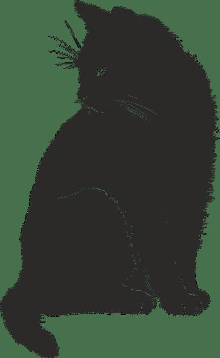 Black cat silhouette Pixababy
