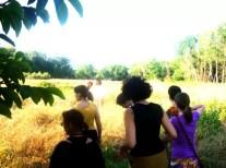2013'VII. Las monas paseando por los campos de Nápoles