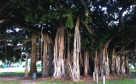 Un árbol gigante