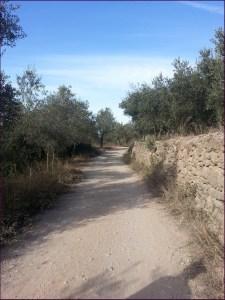 Detalle del camino