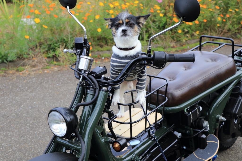 Doggycarry005
