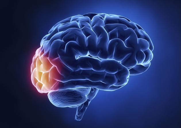 cerebro humano y ruido blanco