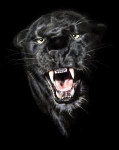 Злая Пантера Фото