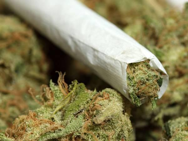 К чему снится конопля курить конопля появление листьев