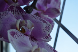 A little bit dark, and I find Orchids hard to photo, but they look ok.