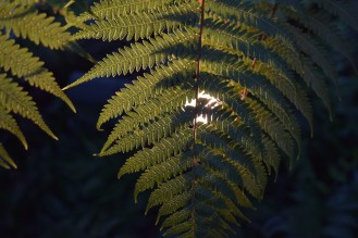 It's just a fern, but the textures in the light...