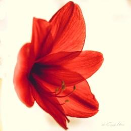Blüte, Natur