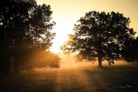 Aue, Nebel, Herbst, Fluss, Eilenburg, Dübener Heide, Morgen, Altweibersommer, Mulde, Kastanienallee