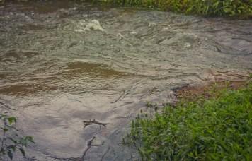 Air sungai sehabis hujan. Sedikit keruh dan arusnya kencang.
