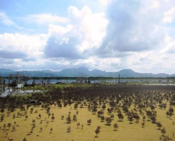 marismas del sur de Sinaloa