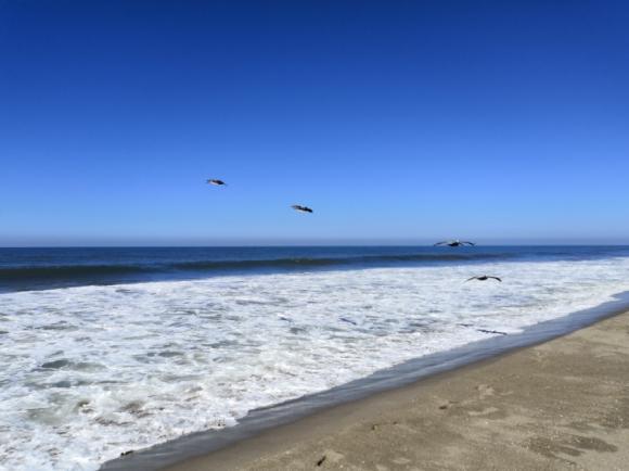 Playas vírgenes-Son Playas