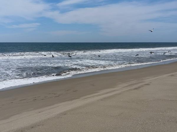 Playa Limpia El Verde camacho