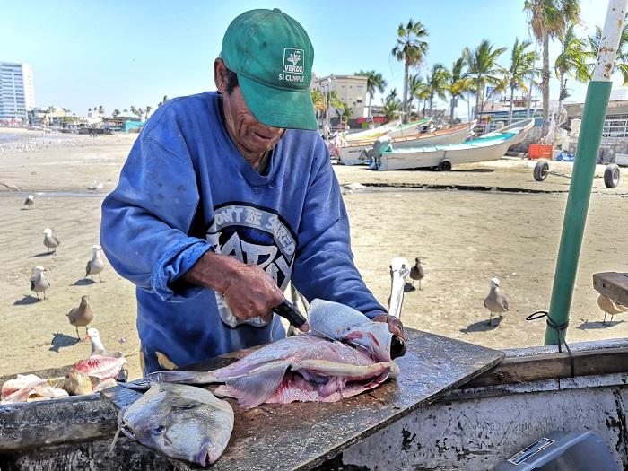 vísceras de pescado