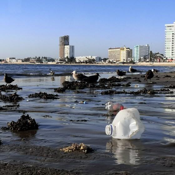 Playa norte Mazatlán