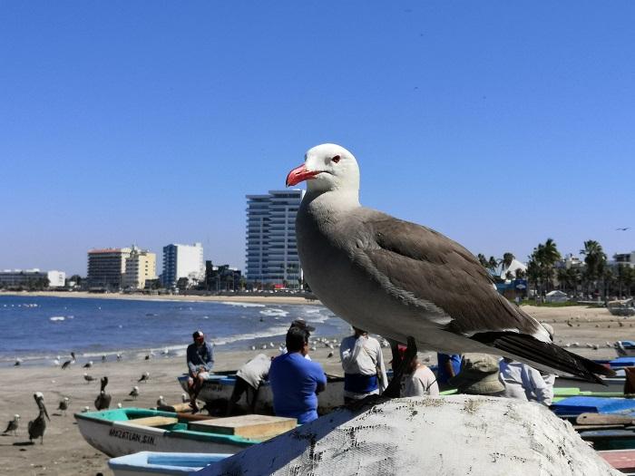 Playas con basura