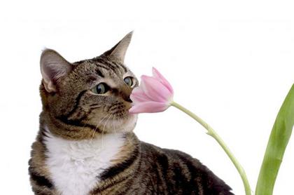 Plantas que son t xicas para los gatos sonrisas de gato for Plantas toxicas gatos