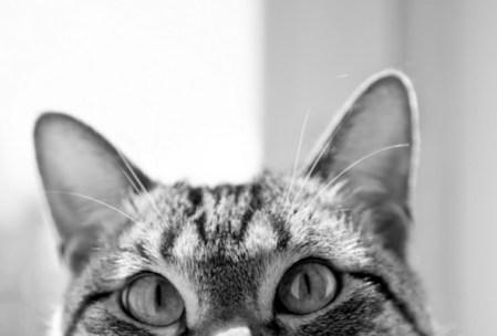 Los sentidos del gato
