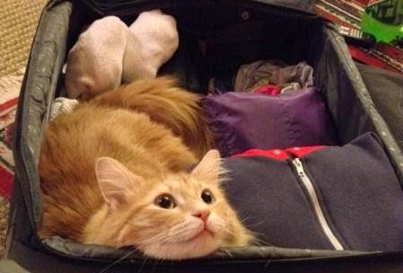 Viajar sin tu gato