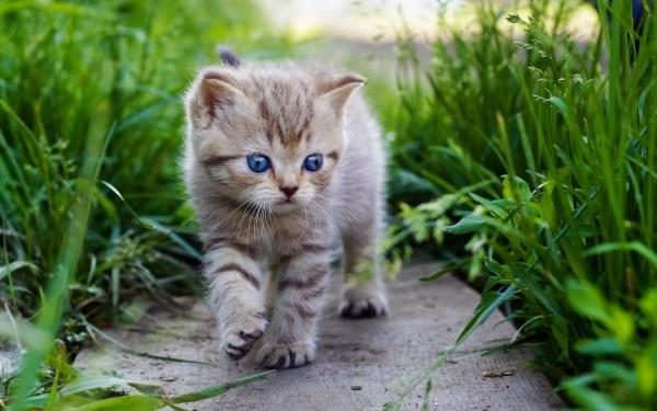 Gatos hermosos