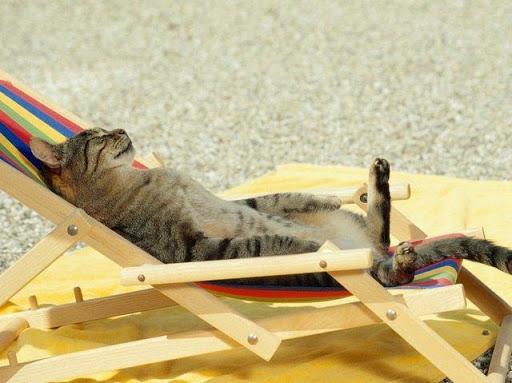 Gatos al sol