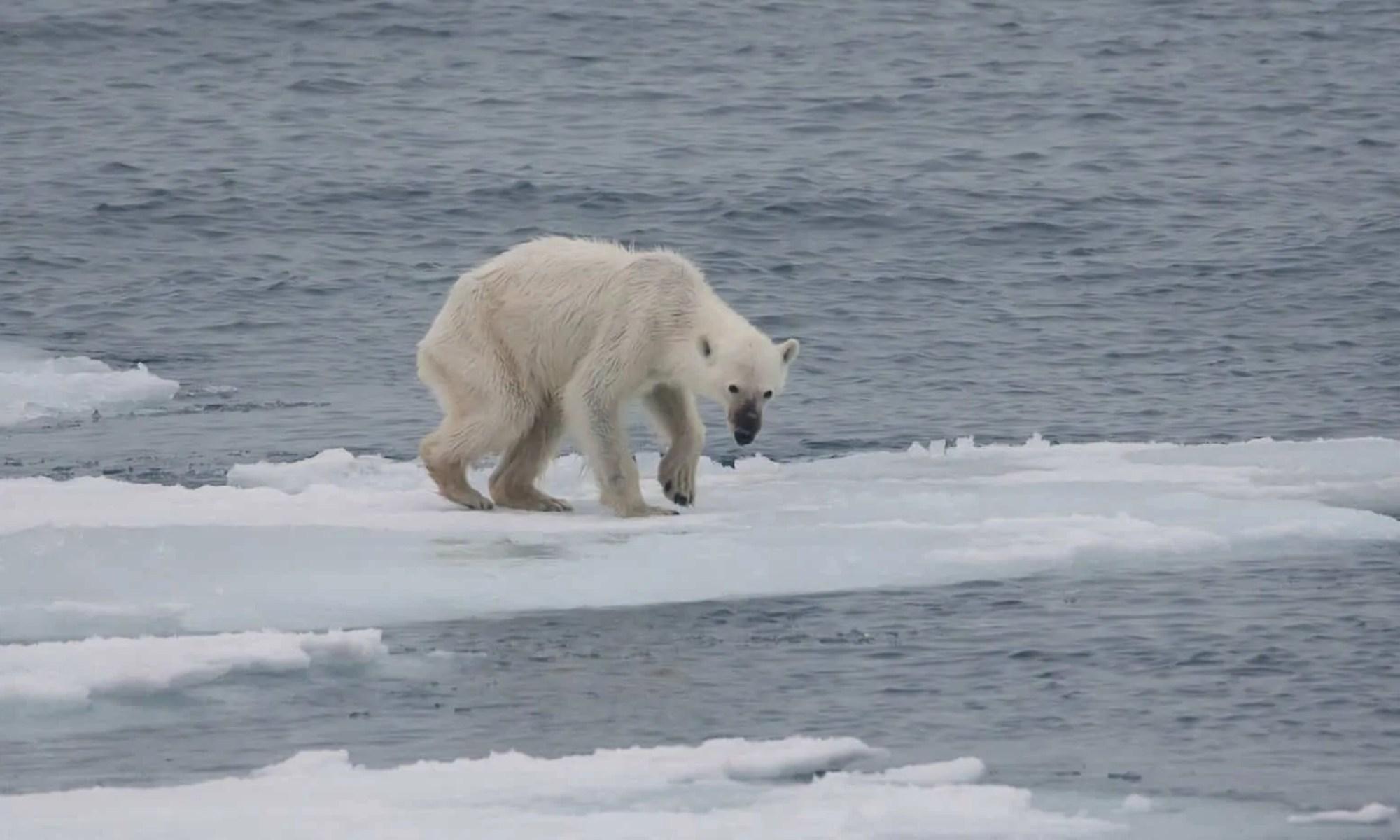 Caldo record in Alaska ... temperature fuori dalla norma