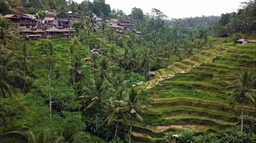 Corona Bali Pro(tected) 2019