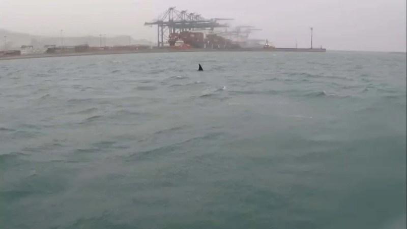 Tre orche davanti a Voltri !!