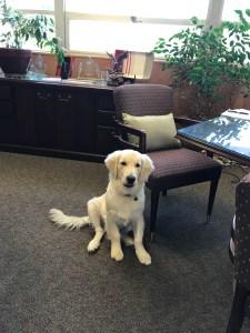August 13, 2017 Neo in Sonya's Office