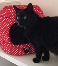 black cat with a red bed