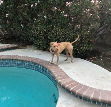 Romeo the Pup