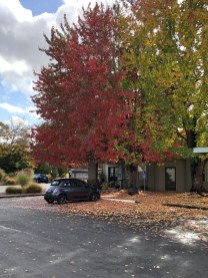 Oct 28 2018 Fall colors Eugene