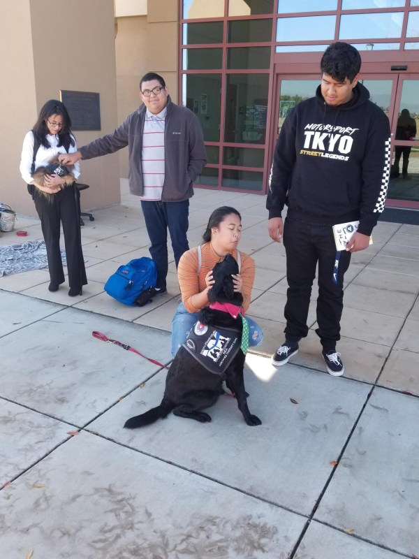 Students playing with dog